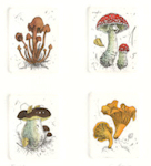 an assortment of 4 plates featuring mushrooms