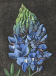 etching of a bluebonnet that is urbanized