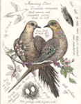 Pair of Mourning Doves surrounded by field notes.