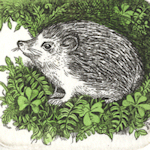 image of a hedgehod