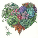 Heart shaped collection of Succulents.